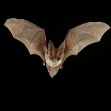 Cincinnati Eastside, OH Events: Families Out at Night: Bats vs. Moths