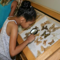 Reptiles, Insects & Amphibians, Oh My Camp - Ages 5-9
