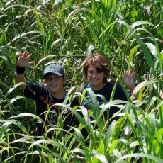 Wesley Chapel-Lutz, FL Events for Kids: 9th Annual Fox Squirrel Corn Maze