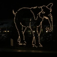 Holiday Lights Spectacular