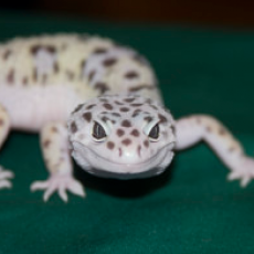Concord, NH Events for Kids: New England Reptile Expo