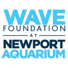 Sharks! with the WAVE Foundation at Mariemont Library