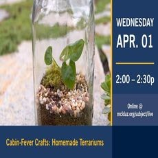 Surprise, AZ Events for Kids: Cabin-Fever Crafts Online: Homemade Terrariums