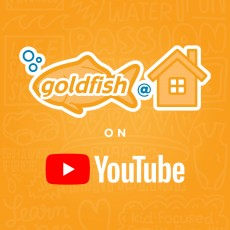Goldfish at Home | Available Anytime