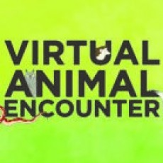 Zoo to You Virtual Animal Encounter