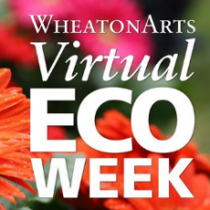 Things to do in Charleston, SC: Kids Virtual Eco Camp