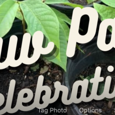 Red Bank, NJ Events for Kids: Paw Paw Celebration