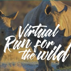 Virtual Run for the Wild