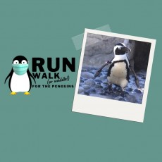 Virtual Run/Walk/Waddle for the Penguins
