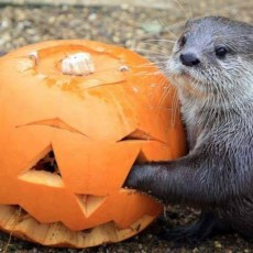 Things to do in Palm Beach Gardens, FL for Kids: Covid Safe Spooky Safari & Drive Through Pumpkin Patch, Animal EDventure Park