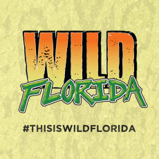 Things to do in Orlando, FL for Kids: Visit Wild Florida Safari and Airboats, Wild Florida