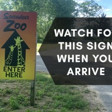 Things to do in Brookline-Norwood, MA for Kids: Zoofari Drive Thru tours, Southwick's Zoo, More than a Zoo