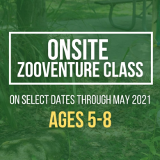 Things to do in Altamonte-Winter Park, FL for Kids: Onsite ZOOventure Class for ages 5-8, Central Florida Zoo & Botanical Gardens