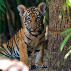Things to do in Palm Beach Gardens, FL for Kids: Tiger Cubs Exhibit is OPEN!, Palm Beach Zoo