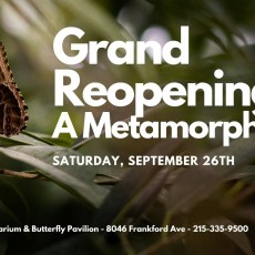 Things to do in Main Line, Pa: Grand Reopening: Insectarium and Butterfly Pavilion