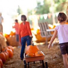 Things to do in Orlando, FL for Kids: Fall at Southern Hill Farms, Southern Hill Farms