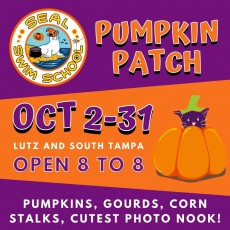 Things to do in Wesley Chapel-Lutz, FL for Kids: Seal Swim School's Pumpkin Patch, Seal Swim School