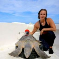 Things to do in Charleston, SC: Explorer Classroom: The Life of a Sea Turtle