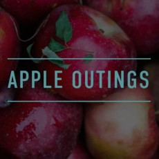 Worcester, MA Events for Kids: Apple Outings