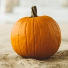 Things to do in Garland-Rowlett, TX: Pumpkin Exploration