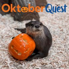 OktoberQuest!