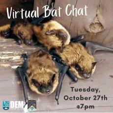 Things to do in Warwick, RI: Virtual Bat Chat