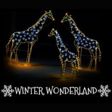 Worcester, MA Events for Kids: Winter Wonderland