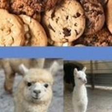 Things to do in West Cobb-East Paulding, GA for Kids: Cookies & Alpacas, L&R Alpaca Haven Farm LLC