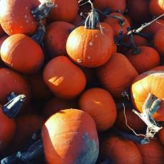 Halloween Activities at The Farm
