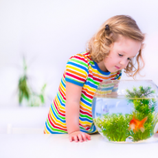 Things to do in Hulafrog at Home: Ocean Wonders with a Princess