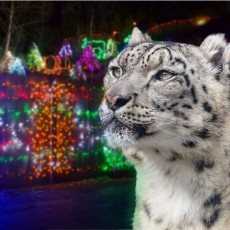 Things to do in Cleveland Southeast, OH: Wild Lights