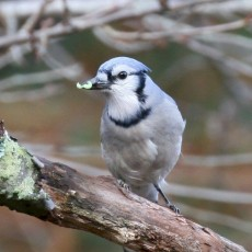 Things to do in Warwick, RI: Bird Walk
