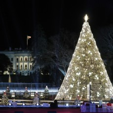 Red Bank, NJ Events for Kids: [National] 98th Annual National Tree Lighting