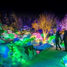Things to do in Lakewood, CO for Kids: Blossom of Light, Denver Botanic Gardens