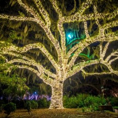 Things to do in Myrtle Beach, SC for Kids: NIGHTS OF A THOUSAND CANDLES 2020, Brookgreen Gardens