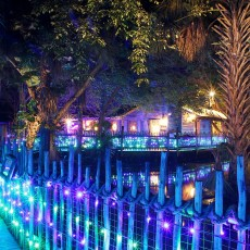 Things to do in Palm Beach Gardens, FL for Kids: Zoo Lights, Palm Beach Zoo