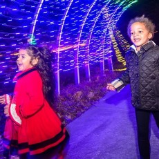 Holidays in the Park at the Museum of Life and Science