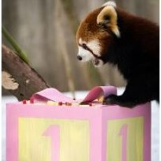 Zoo-It-Yourself Birthday Party