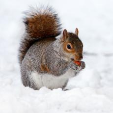 Hibernate, Migrate, or Play in the Snow Program