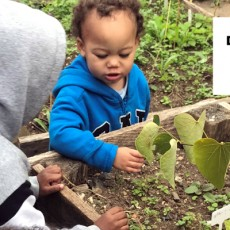 Things to do in Main Line, Pa: Spark Change Workshops: Small Actions for Kids: Protecting Pollinators