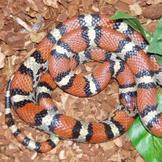 Sunday Family Series: Snakes Alive! {All Ages}