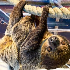 Things to do in Scottsdale, AZ for Kids: Too Cool for School: Slow Down with A Sloth, OdySea Aquarium