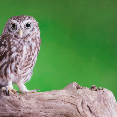 Things to do in Cape May County, NJ: Owl Walk