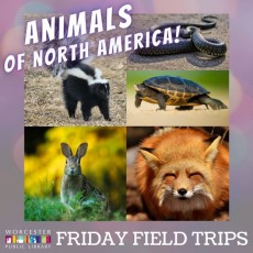 Things to do in Worcester, MA for Kids: Animals of North America: Larger Animals, Worcester Public Library (Main Branch)