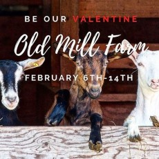 Be Our Valentine at Old Mill Farm