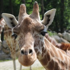 Things to do in Worcester, MA: Walk Thru Southwick's Zoo