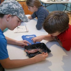 Things to do in Palm Beach Gardens, FL for Kids: HOMESCHOOL WORKSHOP - SQUID DISSECTION LAB, River Center