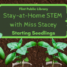 Beverly-Newburyport, MA Events: Stay-at-Home STEM with Miss Stacey: Take & Make Activity Kits
