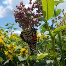 Things to do in Towson, MD for Kids: Bee & Butterfly Bash, The Farmyard