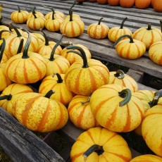 Things to do in Towson, MD for Kids: Farmyard Fall Days, The Farmyard